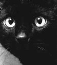 História dos Gatos