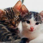 Cuidando de filhotes de gato