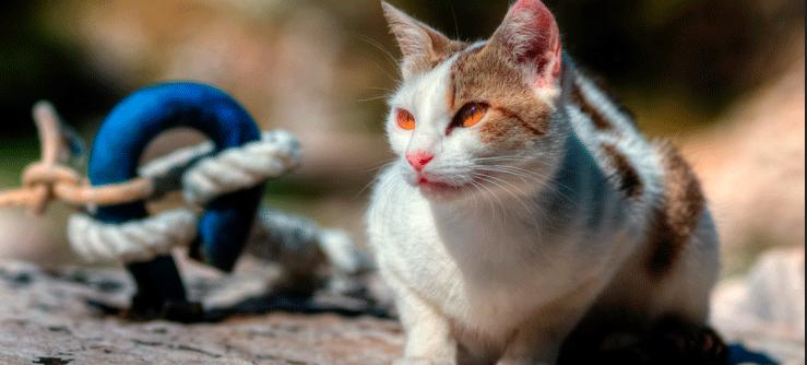 Mais frases sobre gatos