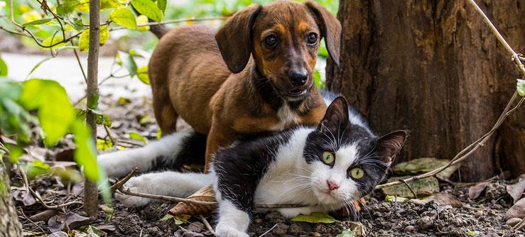 O mito de que cães odeiam gatos