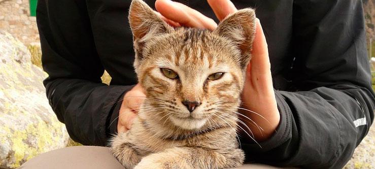 Gatos gostam de carinho assim