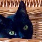 Como saber se o gato está deprimido