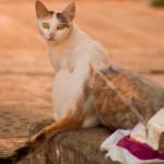 Uma lei contra a matança de gatos e cães