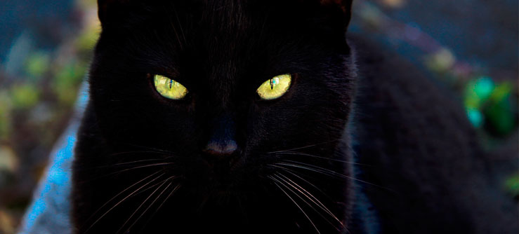 Os gatos na mitologia