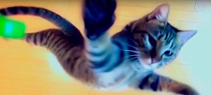 O pulo do gato