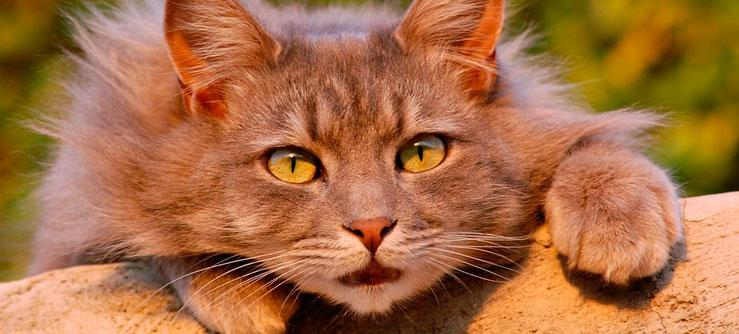 Documentários com gatos