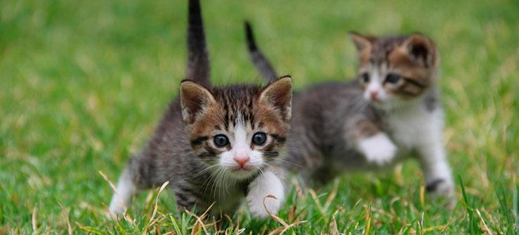 O prazer de ver seu gato crescer