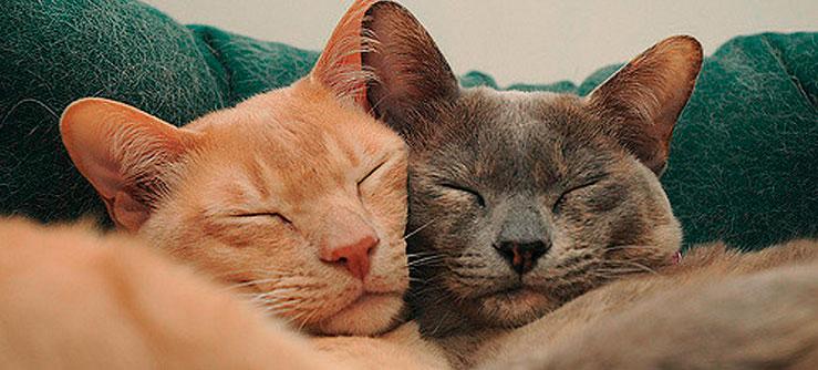 Porque amamos os gatos