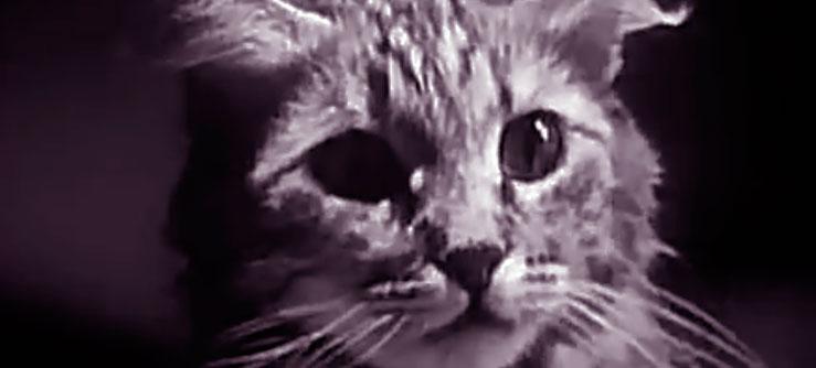 A vida privada de um gato