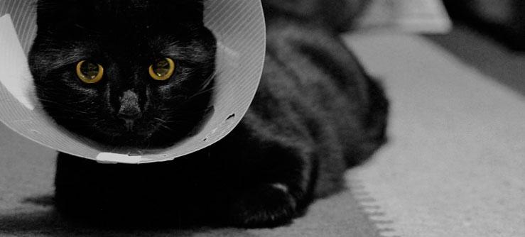 Colar elizabetano. Como tratar feridas em gatos: