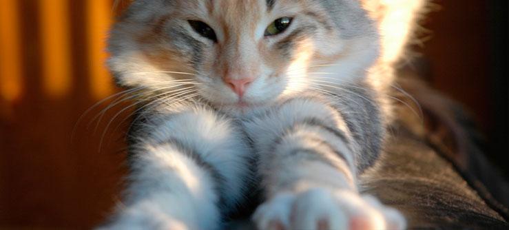 Porque os gatos são sábios