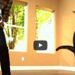 Gatos em câmera lenta