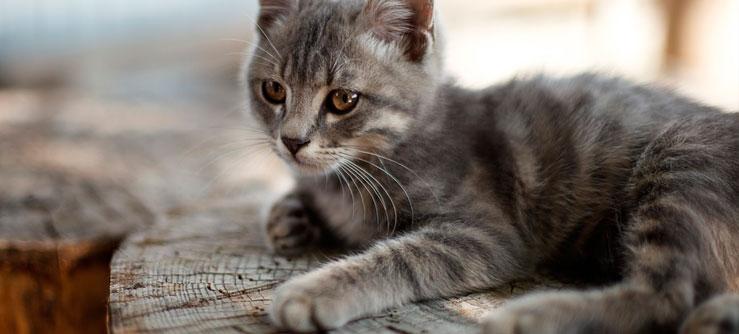 Como distrair os gatos que ficam sozinhos em casa?