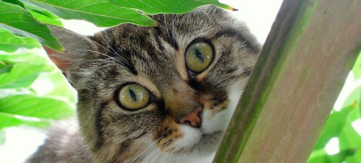 Crônicas de Gatos Curiosos