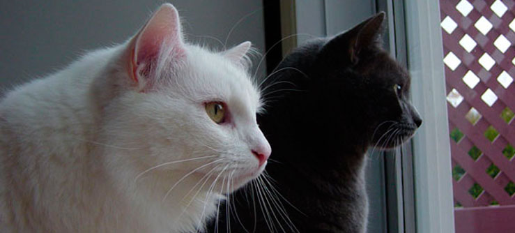 Dois gatos. Cada vez mais gatos no Brasil