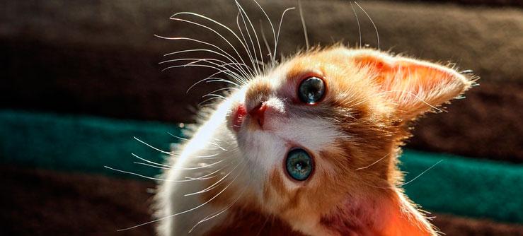Preparando a casa para receber um gatinho