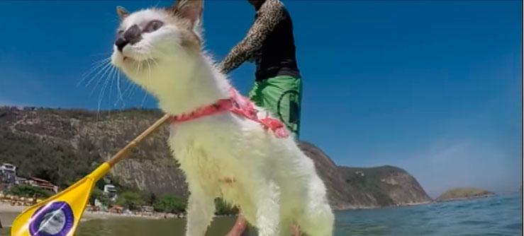 A gata que surfa e nada