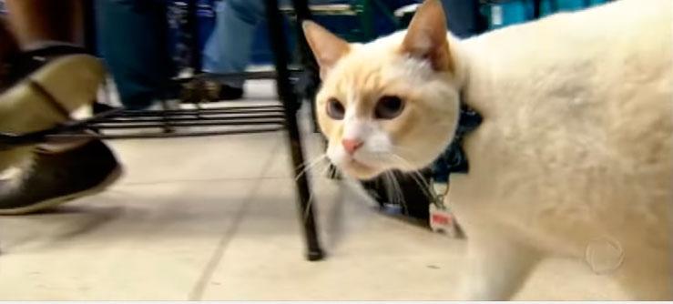 O gato que vai à aula