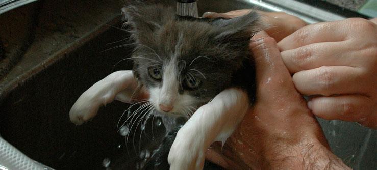 Banho em gatos