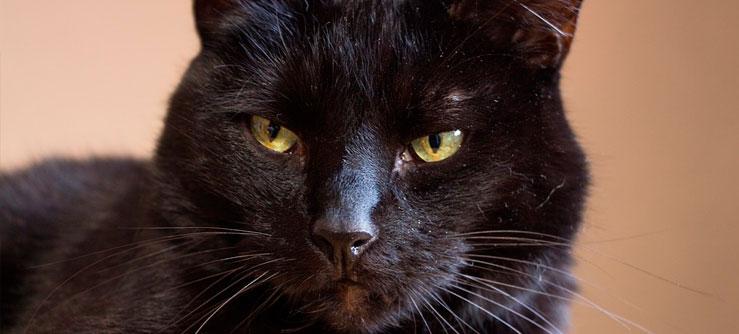 Fotos de gatos pretos