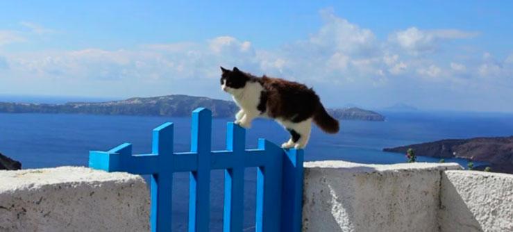 Os Gatos da Ilha de Santorini