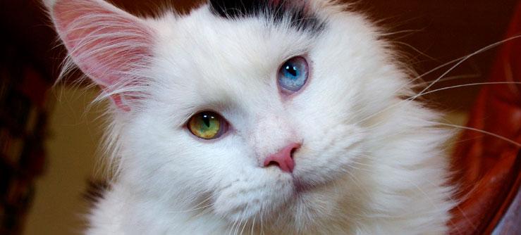 Gatos olham nos olhos