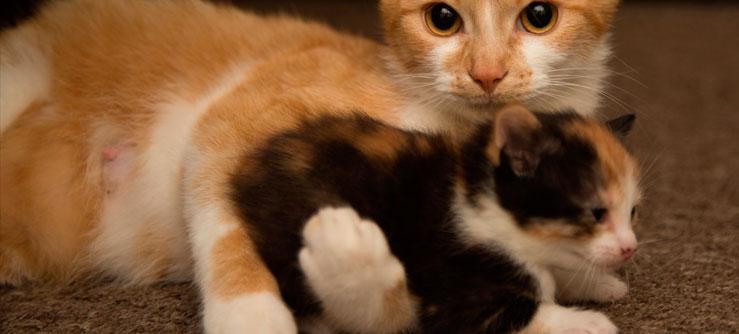 Coisas que você precisa saber sobre os gatos