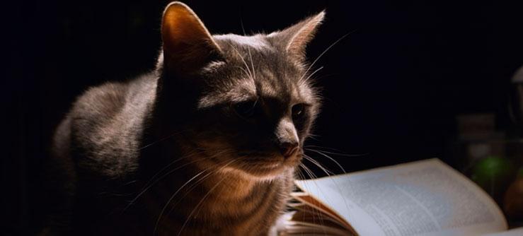 Documentário O Gato e seus Mistérios