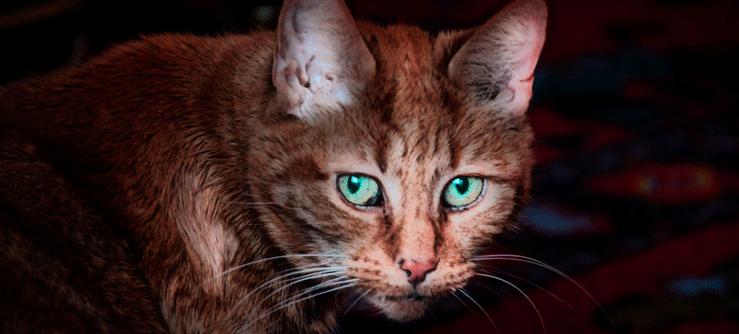 O envelhecimento dos gatos