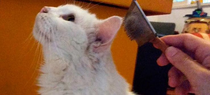 Escovação de Gatos