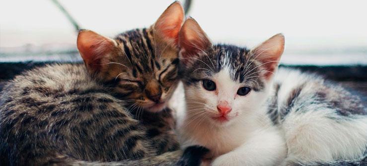 Cuidando de filhotes de gatos