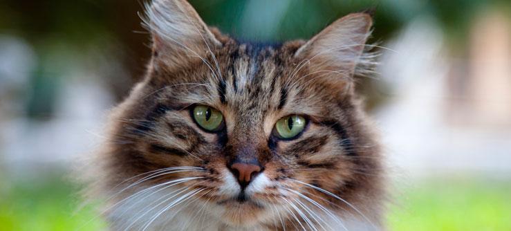 Fotos de gatos - saúde