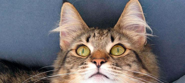 sentidos dos gatos. foto: PCB75/flickr