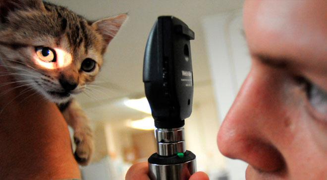 Veterinário: o especialista na saúde do gato