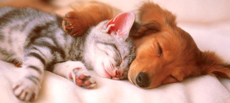 Dicas para ajudar gatos e cães a se darem bem