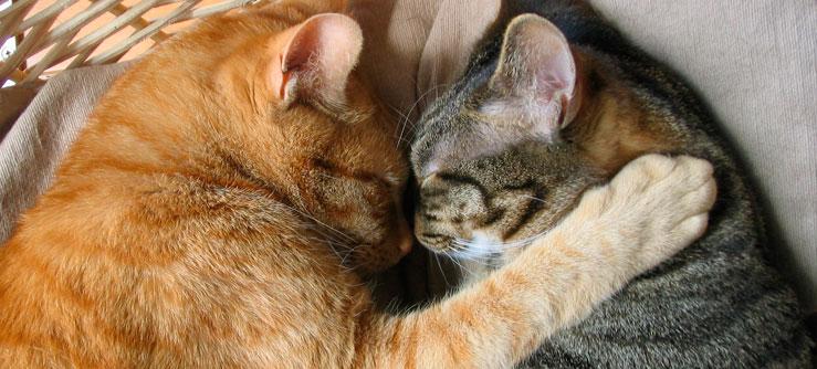 O amor dos gatos