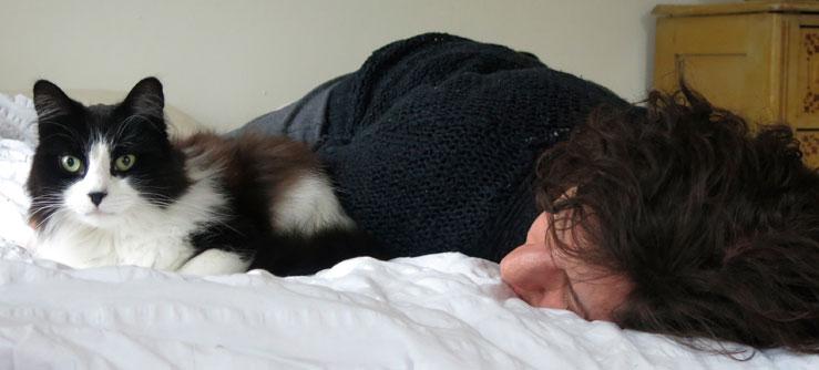 Dormindo com os gatos
