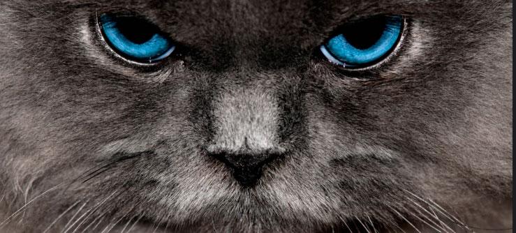 Gatos nem sempre são fofinhos
