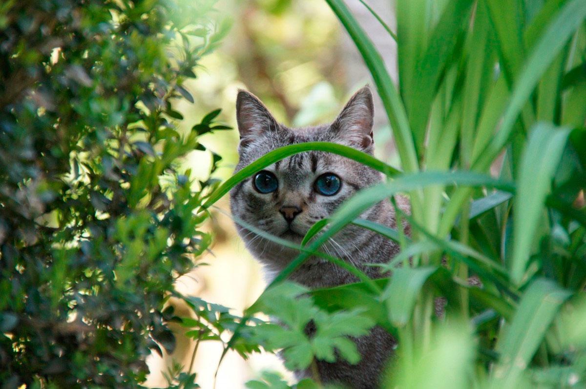 Olhar felino - Fotos de gatos