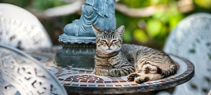 Gatos fazem bem para nossa saúde