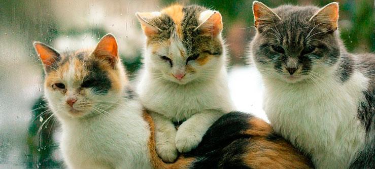 Sociabilidade dos gatos