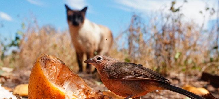 Matadores de passarinhos