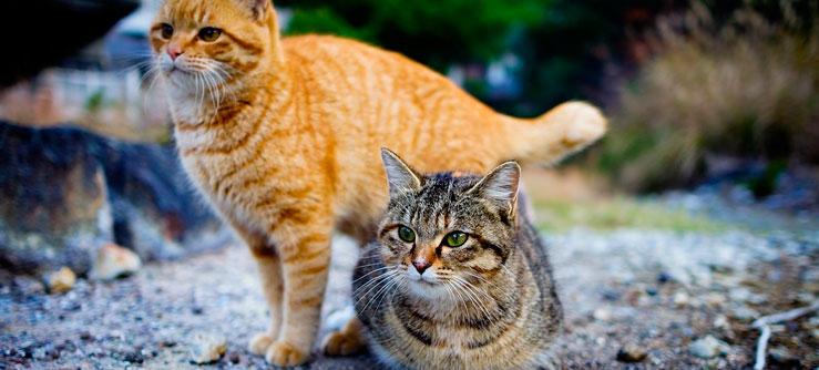 Documentário O gato como ele é
