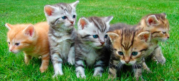 Os gatinhos mais fofos