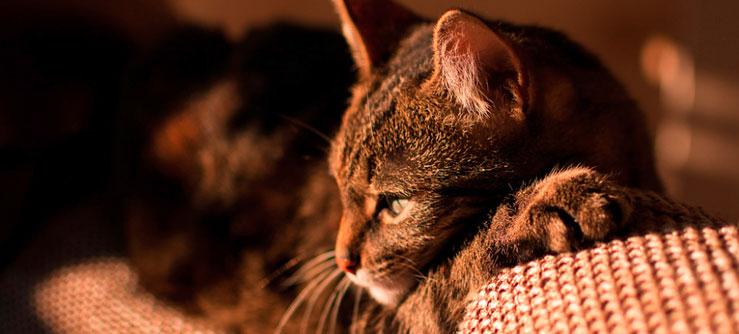 Alergia a gatos