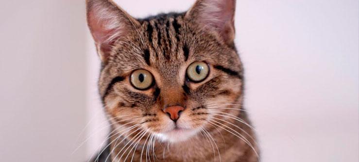 Erros comuns na alimentação de gatos