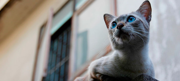 Gatos adoram rotina