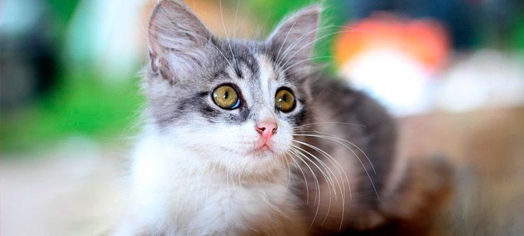 Vermifugação dos gatos