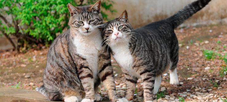 Alimentação de Gatos Castrados