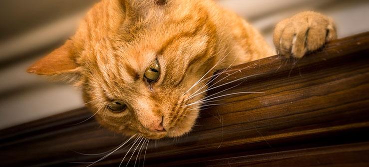 Doença renal é um dos maiores riscos para gatos